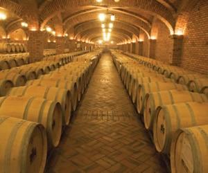 vinhos-nocoes-base