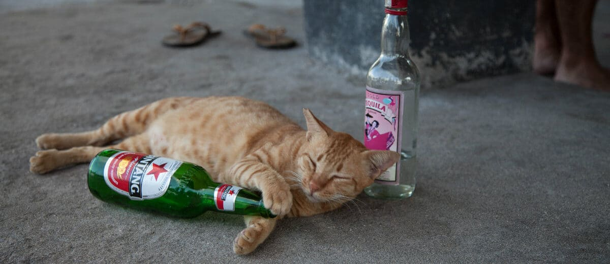 gato de ressaca
