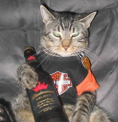 Gato com garrafa de cerveja