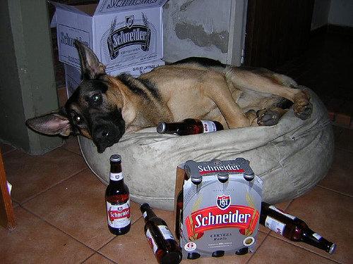 Cachorro bêbado e deprimido