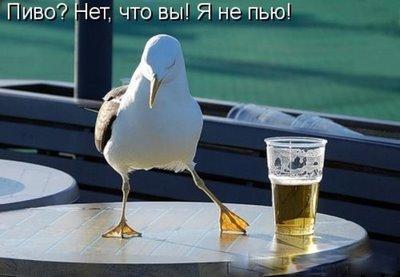 Pássaro chamando um copo de cerveja