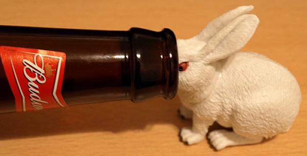 Coelho com cabeça dentro de uma garrafa de cerveja