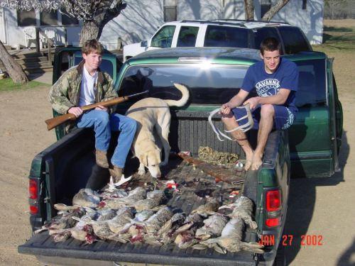 Coelhos mortos numa caçamba