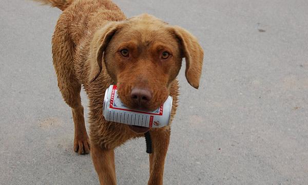 Cachorro com uma lata de cerveja