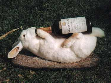 Coelho bebendo whisky