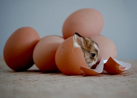 Coelho saindo de dentro de um ovo