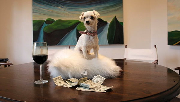 Cachorro em cima da mesa com taça de vinho e dinheiro