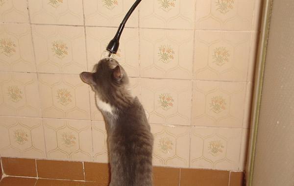 Gato cantando no chuveiro