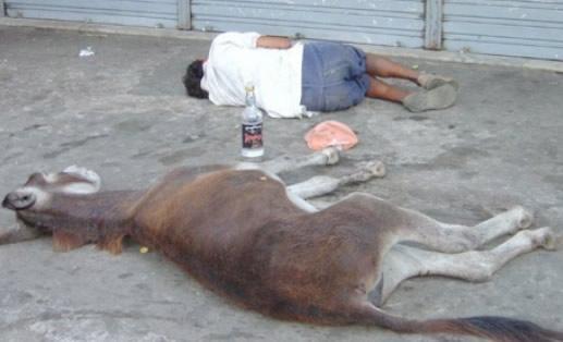 Bêbado deitado com jegue na calçada