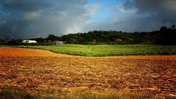 Fazenda com o canavial destruído