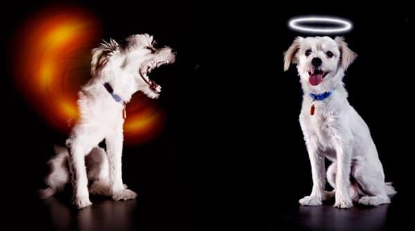 Cachorros vestidos de anjo e demônio
