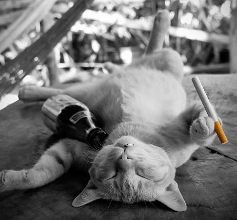 Gato bêbado com cigarro na mão
