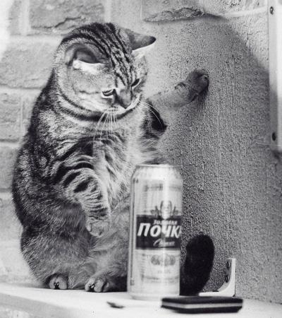 gato olhando para uma lata de cerveja