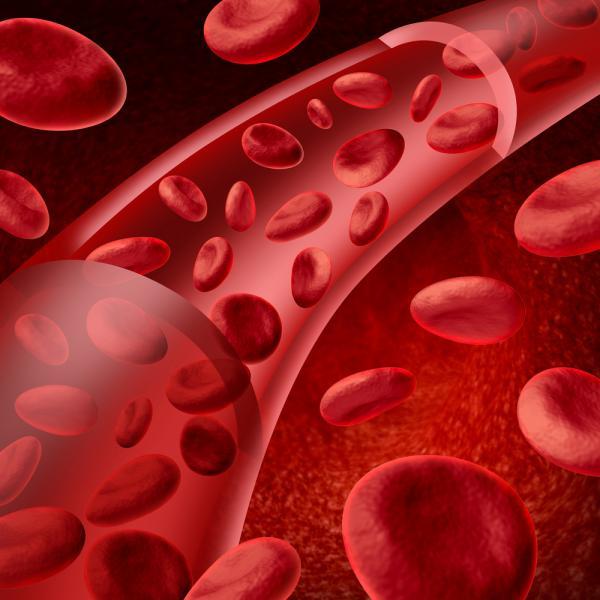 Álcool e Remédios - globulos vermelhos dentro de uma artéria