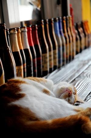 gatinho caido de bebado