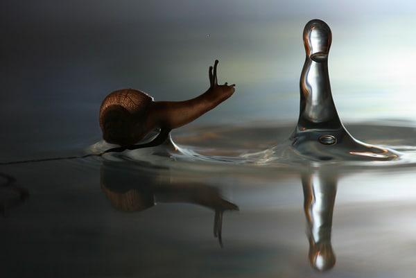 Caracol olhando pingo d'água