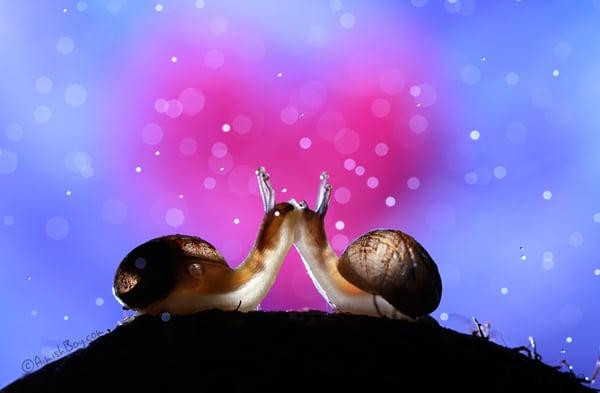 Dois caracóis se beijando
