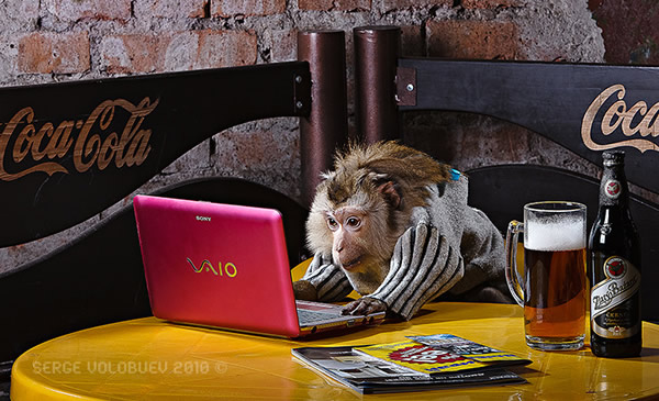 Macaco no computador com cerveja