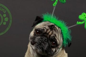 Cachorro verde