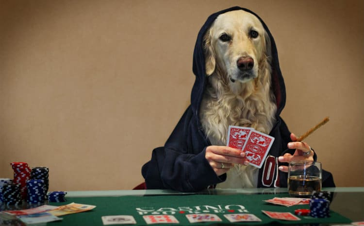 Cachorro jogando poker e contando mentiras etílicas