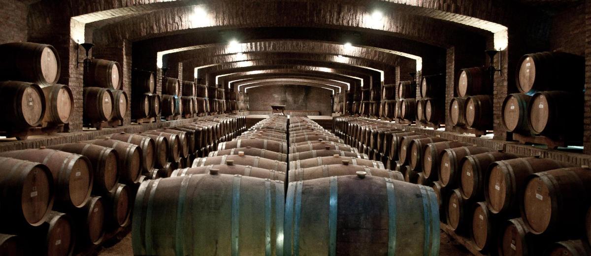 Explorando vinícolas chilenas