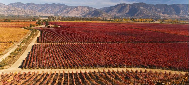 Vinícolas chilenas