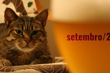 gato bolado vendo cerveja