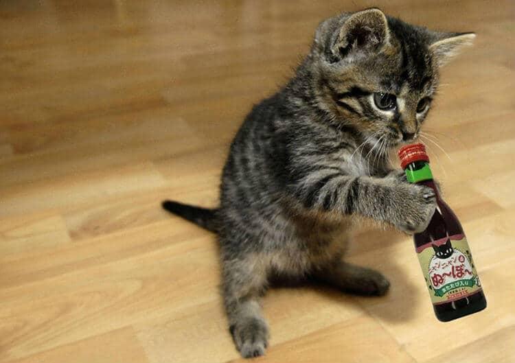 Gato bebendo o vinho para gatos Nyan Nyan Nouveau